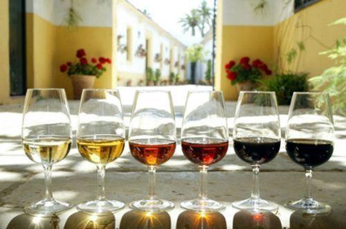 Talleres de cata de vino